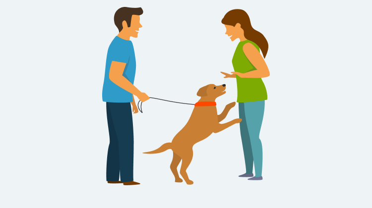 Learn how to train your dog to Jumping with GoodPup.