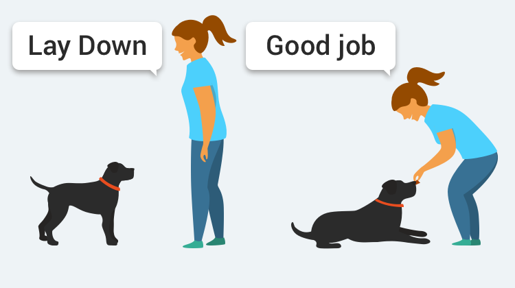 Learn how to train your dog to Lay Down with GoodPup.